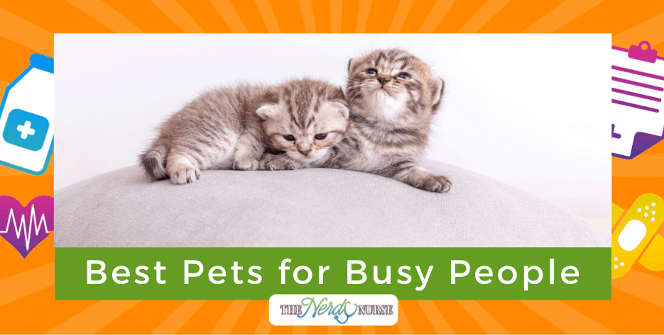 Best Pets for Busy People: Nurse Life Friendly Animals