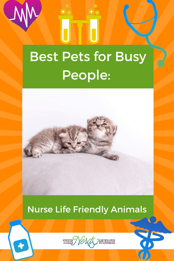Best Pets for Busy People: Nurse Life Friendly Animals. Nurses don't have a lifestyle that lets them have just any pet. These pets are perfect for busy nurses. #thenerdynurse #nurse #nurses #pets #petsfornurses #petsforbusypeople