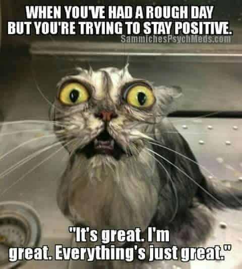 Stressed cat meme